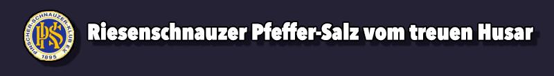 Riesenschnauzer Pfeffer-Salz vom treuen Husar